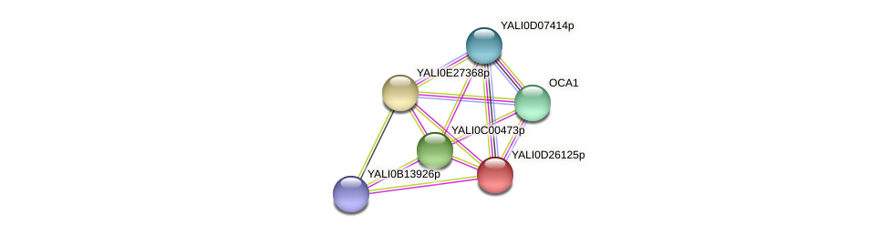 XP_503301.1 protein (Yarrowia lipolytica) - STRING interaction network