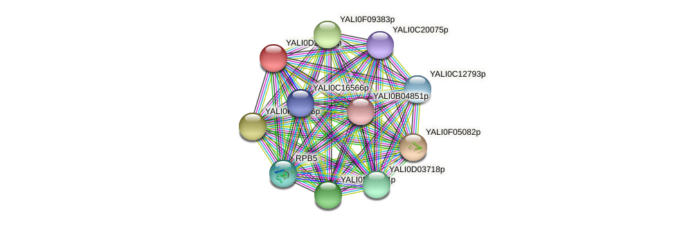 XP_503309.1 protein (Yarrowia lipolytica) - STRING interaction network