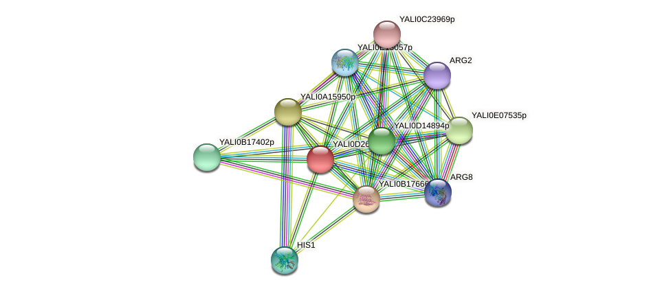 XP_503313.1 protein (Yarrowia lipolytica) - STRING interaction network