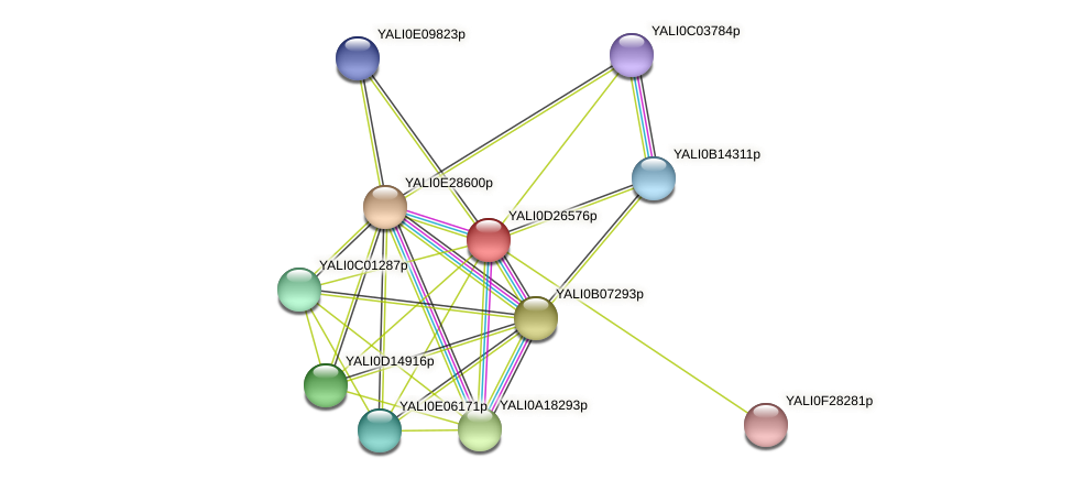 XP_503323.1 protein (Yarrowia lipolytica) - STRING interaction network