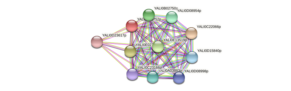 XP_503331.1 protein (Yarrowia lipolytica) - STRING interaction network