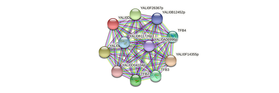 XP_503336.1 protein (Yarrowia lipolytica) - STRING interaction network