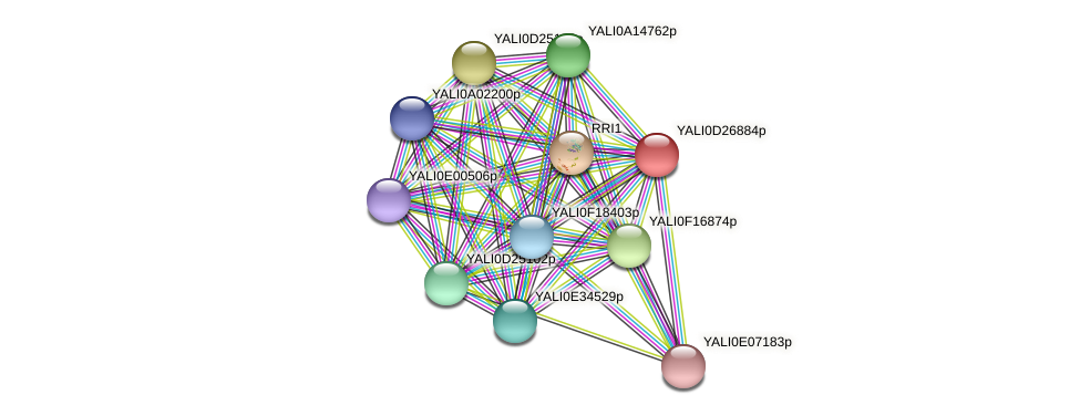 XP_503337.1 protein (Yarrowia lipolytica) - STRING interaction network