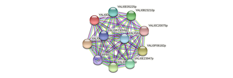 XP_503342.2 protein (Yarrowia lipolytica) - STRING interaction network