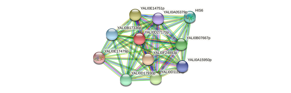 XP_503350.1 protein (Yarrowia lipolytica) - STRING interaction network