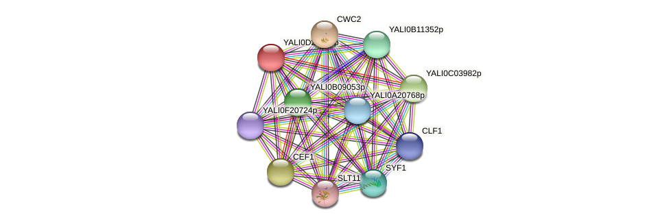XP_503358.1 protein (Yarrowia lipolytica) - STRING interaction network