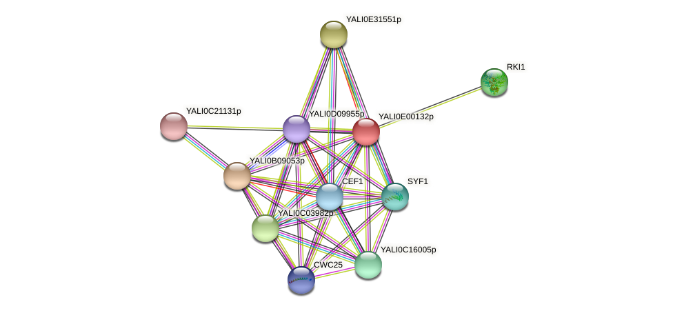 XP_503360.1 protein (Yarrowia lipolytica) - STRING interaction network