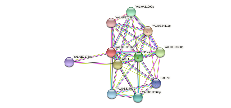 XP_503362.1 protein (Yarrowia lipolytica) - STRING interaction network