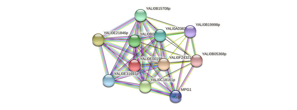 XP_503363.1 protein (Yarrowia lipolytica) - STRING interaction network