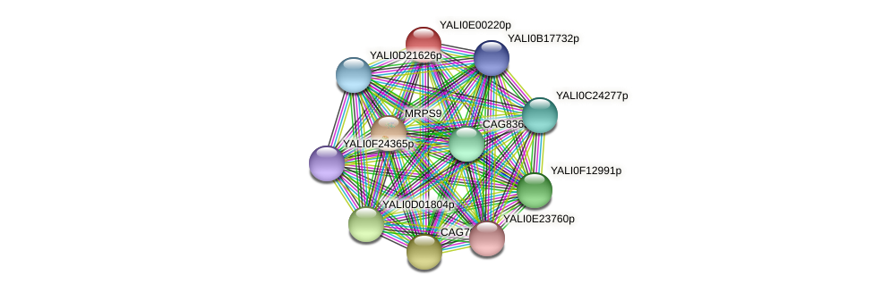XP_503364.2 protein (Yarrowia lipolytica) - STRING interaction network