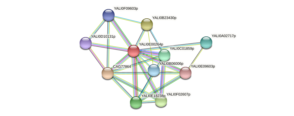 XP_503366.1 protein (Yarrowia lipolytica) - STRING interaction network