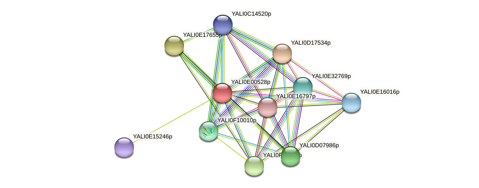 XP_503375.1 protein (Yarrowia lipolytica) - STRING interaction network