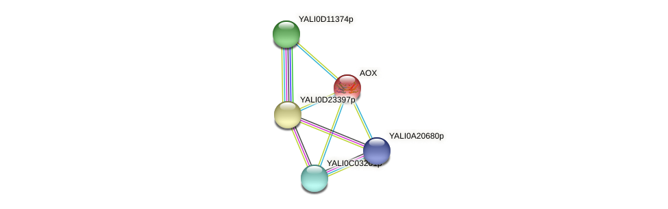 AOX protein (Yarrowia lipolytica) - STRING interaction network