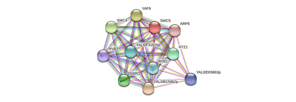 SWC5 protein (Yarrowia lipolytica) - STRING interaction network