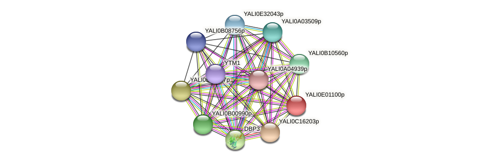 XP_503401.1 protein (Yarrowia lipolytica) - STRING interaction network