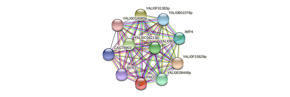 PNO1 protein (Yarrowia lipolytica) - STRING interaction network