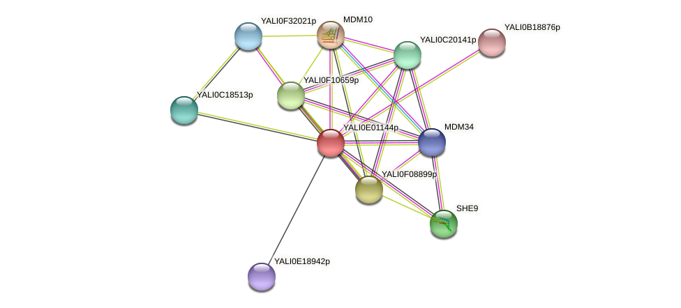 XP_503403.1 protein (Yarrowia lipolytica) - STRING interaction network