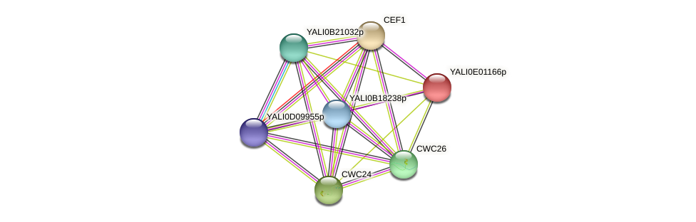 XP_503404.1 protein (Yarrowia lipolytica) - STRING interaction network