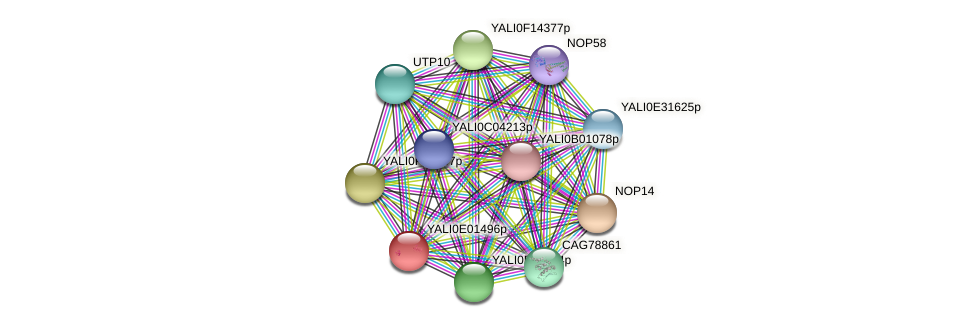 XP_503418.1 protein (Yarrowia lipolytica) - STRING interaction network