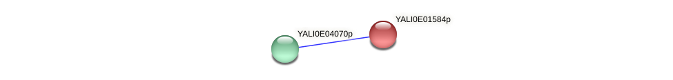 XP_503422.1 protein (Yarrowia lipolytica) - STRING interaction network
