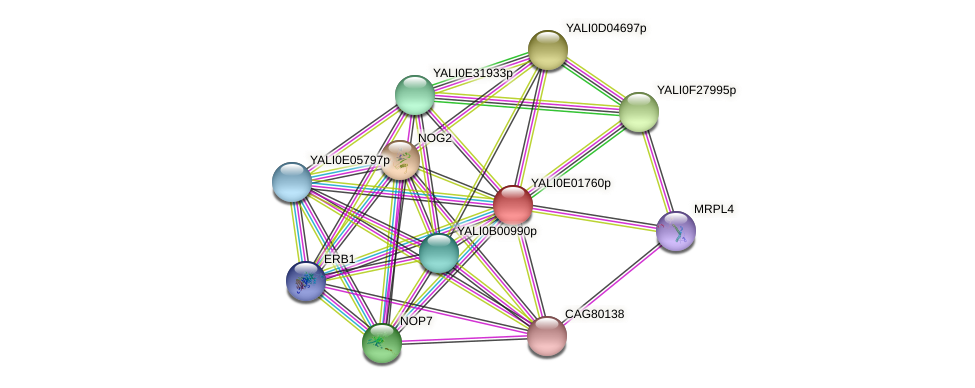 XP_503429.1 protein (Yarrowia lipolytica) - STRING interaction network