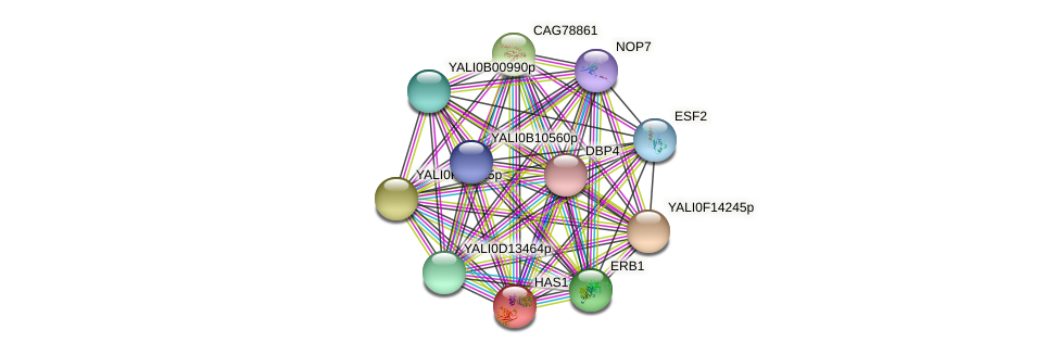 HAS1 protein (Yarrowia lipolytica) - STRING interaction network