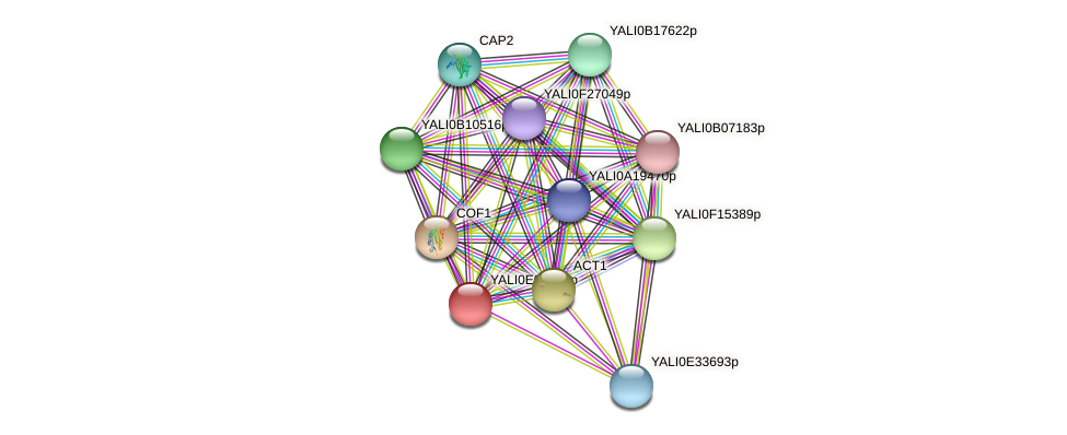 XP_503434.1 protein (Yarrowia lipolytica) - STRING interaction network