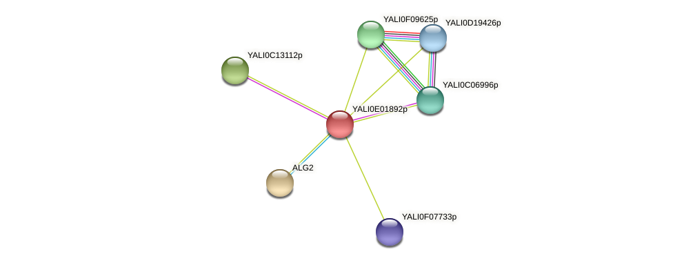 XP_503435.1 protein (Yarrowia lipolytica) - STRING interaction network