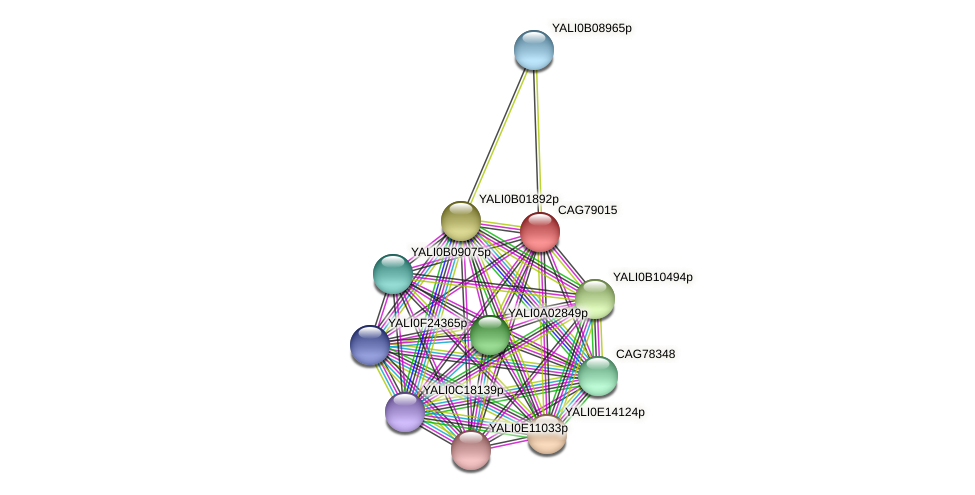 XP_503436.1 protein (Yarrowia lipolytica) - STRING interaction network