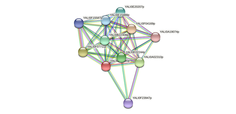 XP_503444.1 protein (Yarrowia lipolytica) - STRING interaction network