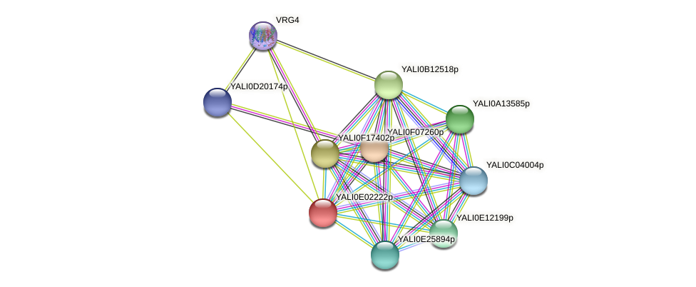 XP_503450.1 protein (Yarrowia lipolytica) - STRING interaction network
