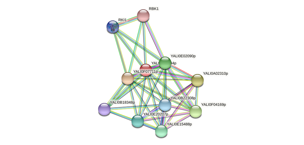 XP_503451.1 protein (Yarrowia lipolytica) - STRING interaction network