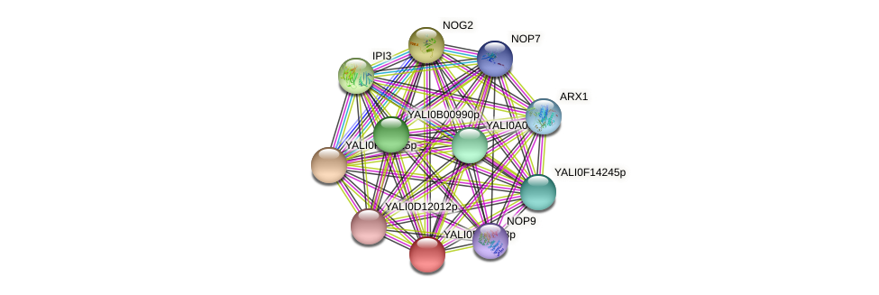 XP_503466.1 protein (Yarrowia lipolytica) - STRING interaction network
