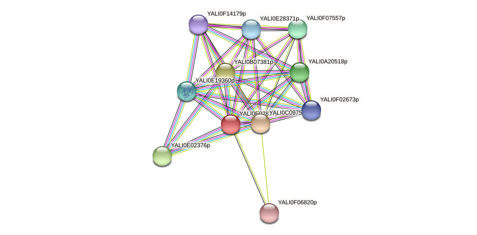 XP_503475.1 protein (Yarrowia lipolytica) - STRING interaction network