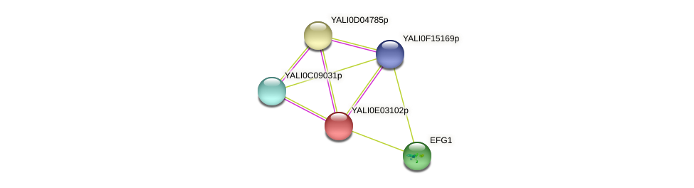 XP_503484.1 protein (Yarrowia lipolytica) - STRING interaction network