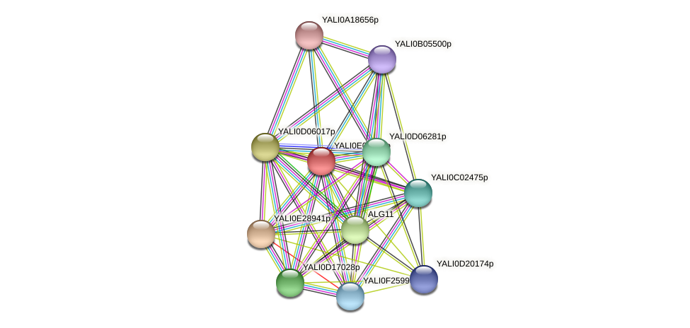 XP_503488.1 protein (Yarrowia lipolytica) - STRING interaction network