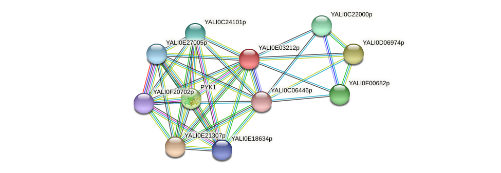 XP_503489.1 protein (Yarrowia lipolytica) - STRING interaction network