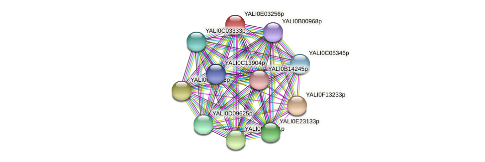 XP_503491.1 protein (Yarrowia lipolytica) - STRING interaction network