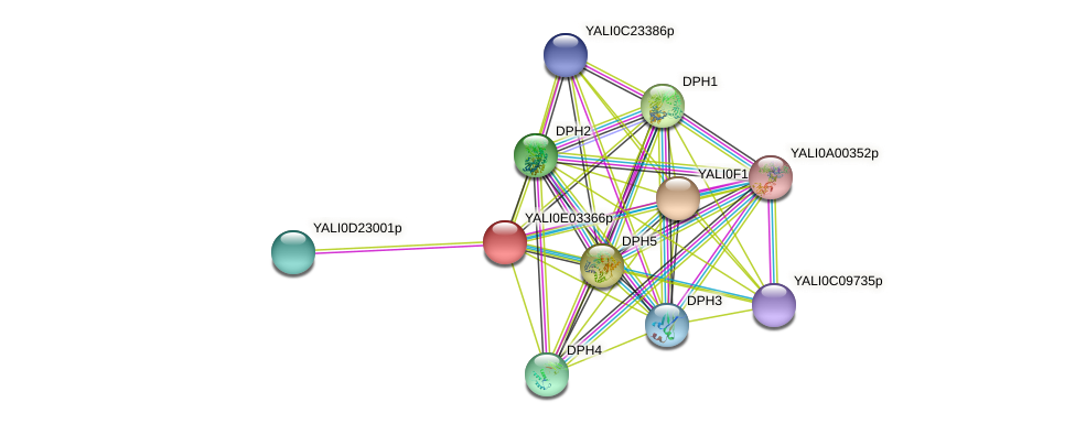 XP_503496.1 protein (Yarrowia lipolytica) - STRING interaction network