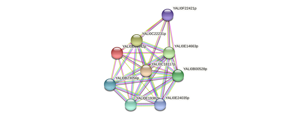 XP_503503.1 protein (Yarrowia lipolytica) - STRING interaction network