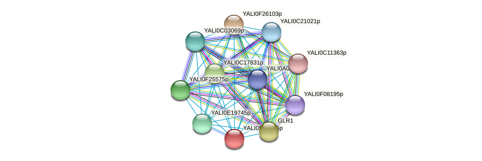 XP_503505.1 protein (Yarrowia lipolytica) - STRING interaction network
