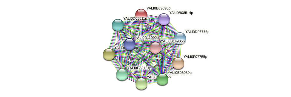 XP_503507.1 protein (Yarrowia lipolytica) - STRING interaction network