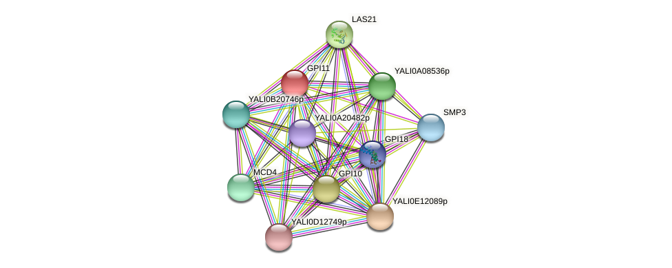 GPI11 protein (Yarrowia lipolytica) - STRING interaction network
