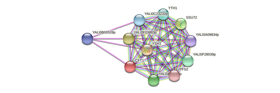 CFT1 protein (Yarrowia lipolytica) - STRING interaction network