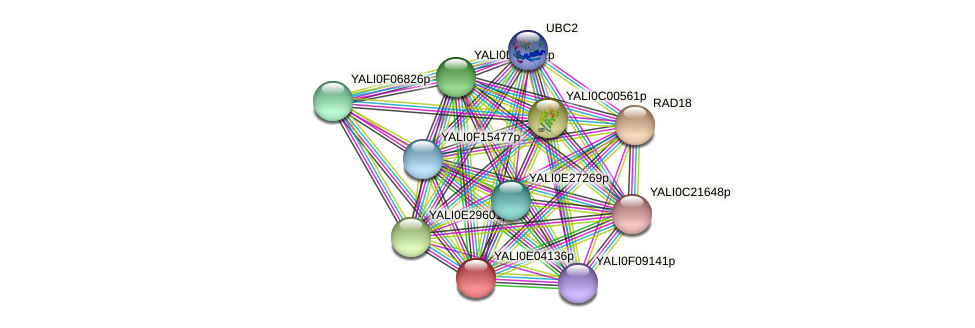 XP_503529.1 protein (Yarrowia lipolytica) - STRING interaction network