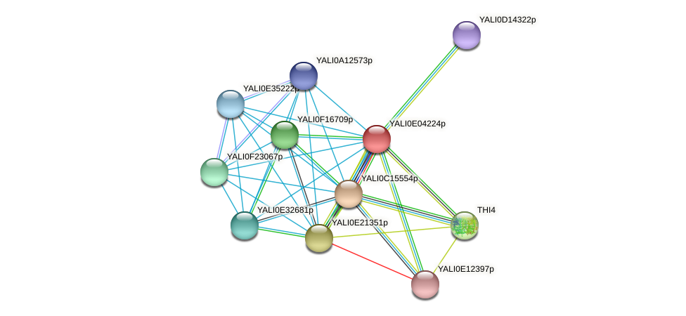 XP_503531.1 protein (Yarrowia lipolytica) - STRING interaction network