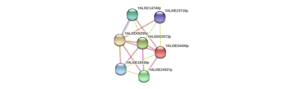 XP_503539.1 protein (Yarrowia lipolytica) - STRING interaction network