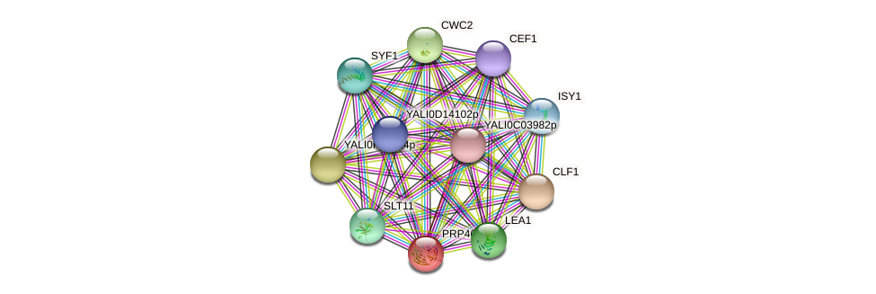 PRP46 protein (Yarrowia lipolytica) - STRING interaction network