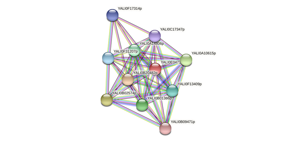 XP_503554.1 protein (Yarrowia lipolytica) - STRING interaction network