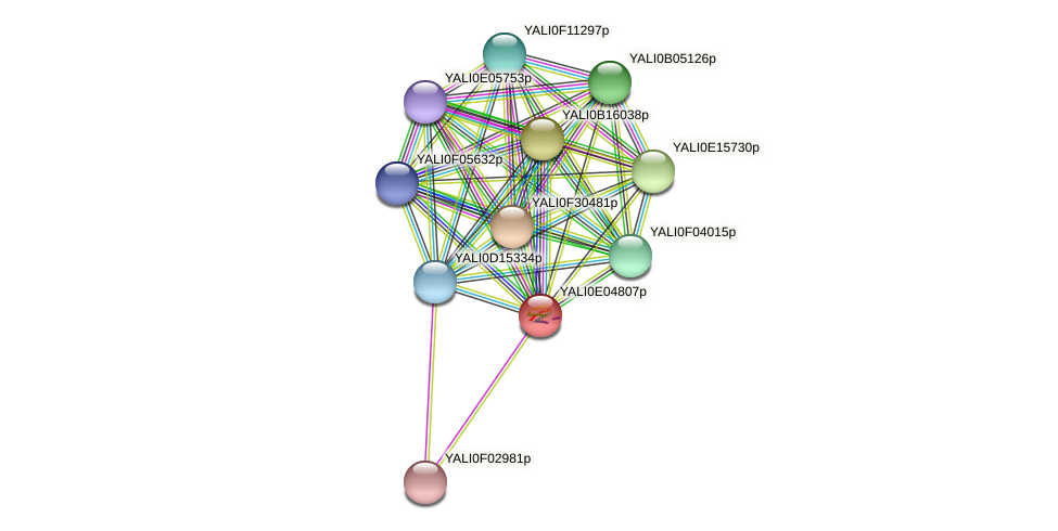 XP_503558.1 protein (Yarrowia lipolytica) - STRING interaction network
